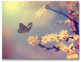 Plakat - Butterfly and cherry blossom