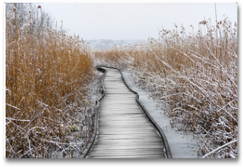 Plakat - Boardwalk with frozen reeds