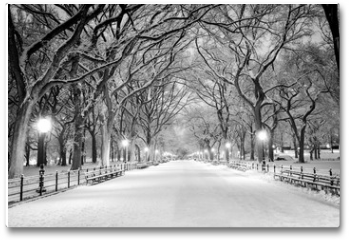 Plakat - Central Park, NY covered in snow at dawn