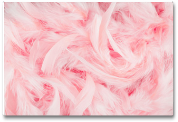 Plakat - Pink feathers background