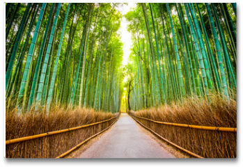 Plakat - Bamboo Forest of Kyoto, Japan