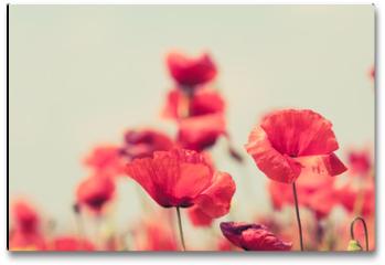 Plakat - Poppy flowers retro peaceful summer background