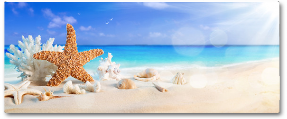 Plakat - seashells on seashore in tropical beach - summer holiday background