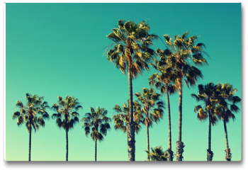Plakat - Palm trees at Santa Monica beach. Vintage post processed. Fashion, travel, summer, vacation and tropical beach concept.