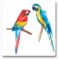 Plakat - Watercolor parrot