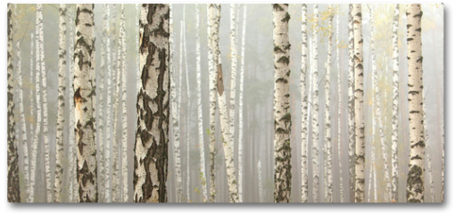 Plakat - Grove of birch trees and dry grass in early autumn, fall panorama