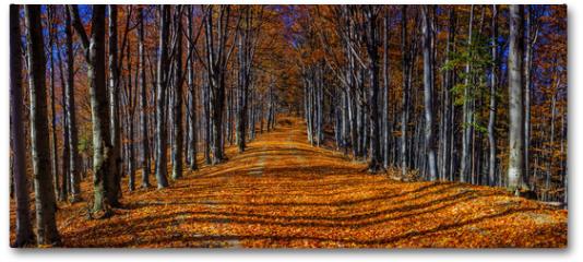 Plakat - Colorful autumn trees