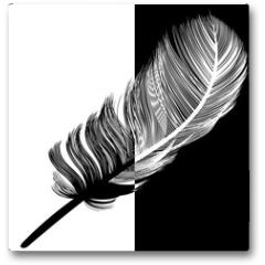 Plakat - Plume en noir et en blanc