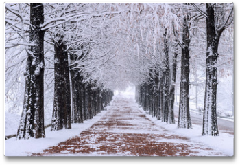 Plakat - Row of trees in Winter with falling snow.