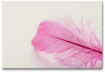 Plakat - Tender feather on light background for your design, pink color, copy space for text