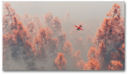 Plakat - Single engine airplane over autumn pines in the mist.