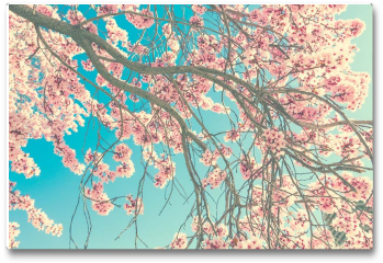 Plakat - Wiosenny kwiat