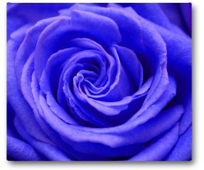 Plakat - Róża