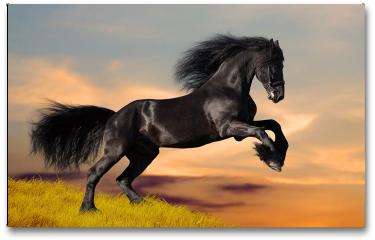 Plakat - Koń fryzyjski galopujący o wschodzie słońca