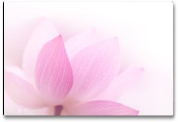 Plakat - Zbliżenie na płatki lotosu