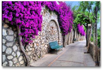 Plakat -  Tętniąca życiem ścieżka kwiatowa w Capri, Włochy