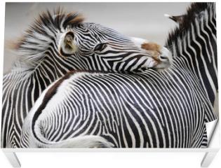 Naklejka na stół i biurko - Zebra