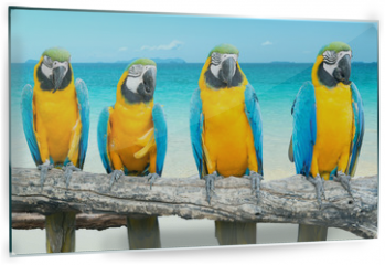 Panel szklany do kuchni - Blue and Gold Macaw on tropical beautiful beach and sea