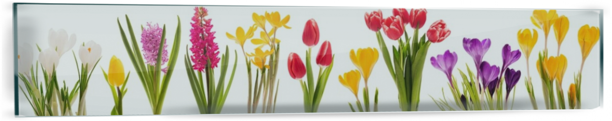 Panel szklany do kuchni - Spring flowers collection
