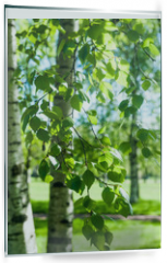 Panel szklany do kuchni - Young birch branches in the sunlight . Spring green background. Juicy greens