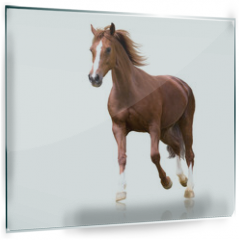 Panel szklany do kuchni - red horse with the three white legs and white line on the face isolated on white background runs