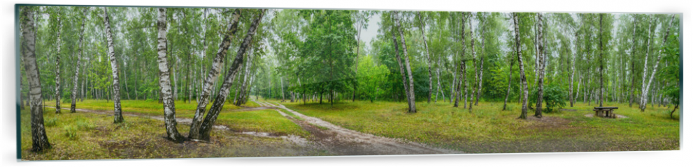 Panel szklany do kuchni - Birch grove with a road and bench on sunny summer day, huge panorama