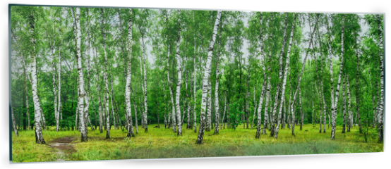 Panel szklany do kuchni - Birch grove with a road on sunny summer day, summertime landscape