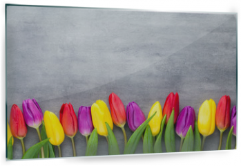 Panel szklany do kuchni - Multicolored spring flowers, tulip on a gray background.