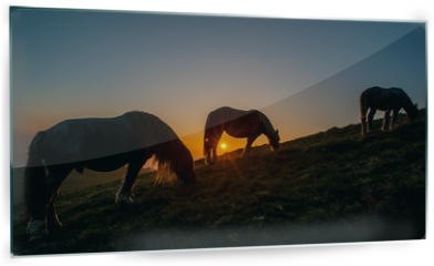 Panel szklany do kuchni - horse grazing in the mountains at sunset