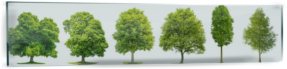 Panel szklany do kuchni - Collection trees maple oak birch chestnut Isolated nature objects