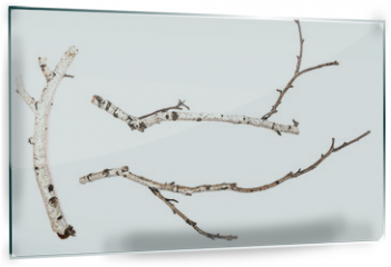 Panel szklany do kuchni - Birch branches isolated on white background. Natural decoration elements.