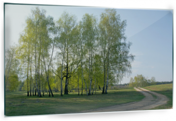 Panel szklany do kuchni - Spring birch forest and road