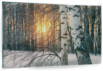 Panel szklany do kuchni - Birch tree in winter forest at sunset