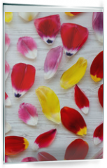 Panel szklany do kuchni - Colorful petals of tulips on white wooden surface, overhead view. Close-up.