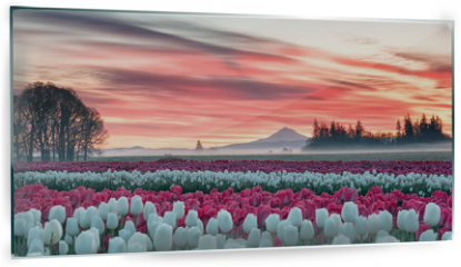 Panel szklany do kuchni - a tulip field under a pink sunrise with a mountain in the background