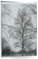 Panel szklany do kuchni - branches of a birch tree covered with snow in winter forest