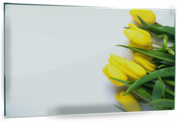 Panel szklany do kuchni - Yellow tulips on white background. The concept of spring or women's day