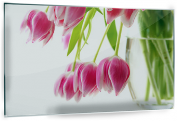 Panel szklany do kuchni - Bouquet of tulips isolated on white background.Spring greeting card.