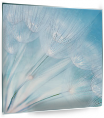 Panel szklany do kuchni - Abstract dandelion flower background