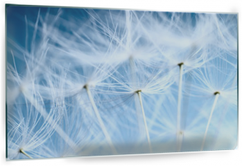 Panel szklany do kuchni - The Dandelion background. Macro photo of dandelion seeds.