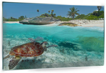 Panel szklany do kuchni - Caribbean Sea scenery with green turtle in Mexico
