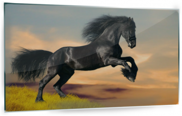 Panel szklany do kuchni - Black Friesian horse gallops in sunset