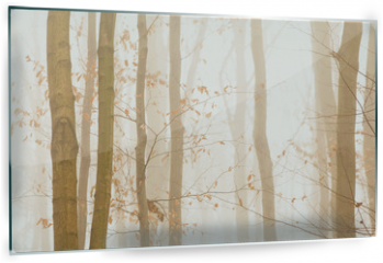 Panel szklany do kuchni - Trees quickly disappearing in yellow bright fog