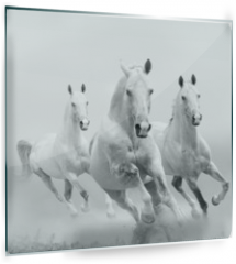 Panel szklany do kuchni - white horses in dust