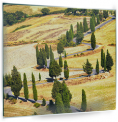 Panel szklany do kuchni - Cypress tree scenic road in Monticchiello, Tuscany, Italy.