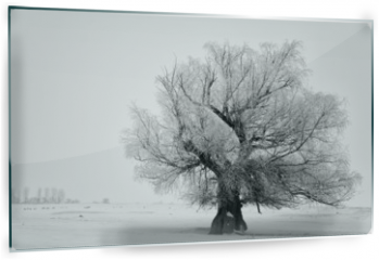 Panel szklany do kuchni - Beautiful tree in winter time in February 2014, Romania
