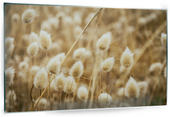 Panel szklany do kuchni - Dry golden and soft spare of grass