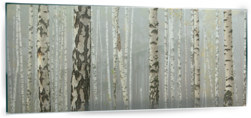 Panel szklany do kuchni - Grove of birch trees and dry grass in early autumn, fall panorama
