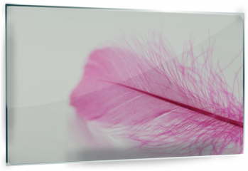 Panel szklany do kuchni - Tender feather on light background for your design, pink color, copy space for text